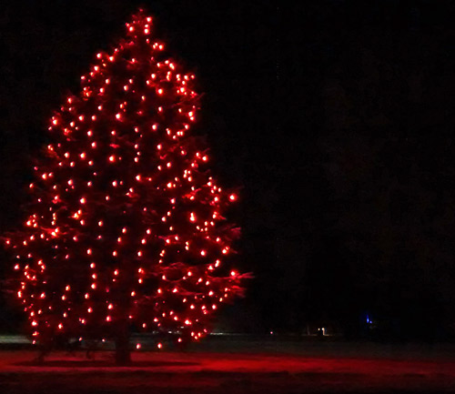 The River Heights tree brightens up Ryan Place Park. (Melanie Fentermaker photo)